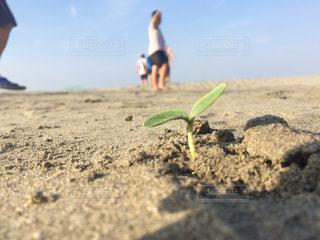 砂浜の緑 - No.1184239