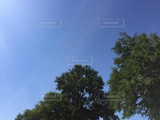 青空の下にある木の写真・画像素材[1193060]