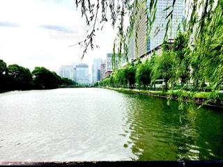 東京の散歩道の写真・画像素材[1275290]