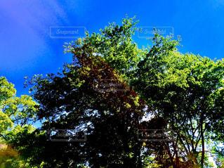 木と青空の写真・画像素材[1378417]