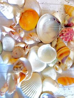集めた貝殻たちの写真・画像素材[1378422]