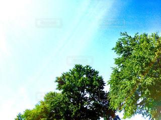 木と青空と雲との写真・画像素材[1378479]