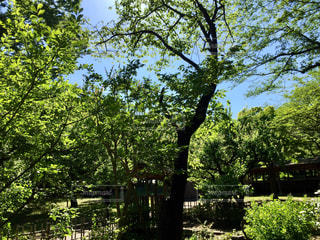 公園の木の写真・画像素材[1378481]