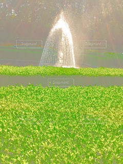 草の中の噴水の写真・画像素材[1378485]