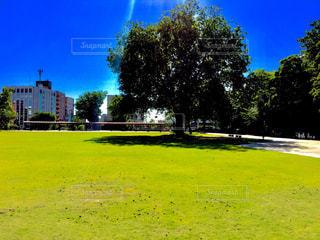 公園の広場の木の写真・画像素材[1391620]