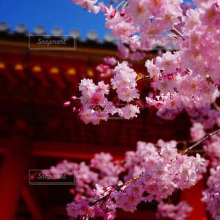 近くの花のアップの写真・画像素材[1185154]