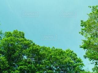 自然の写真・画像素材[12691]