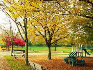 公園の写真・画像素材[292708]