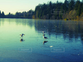 自然の写真・画像素材[293962]