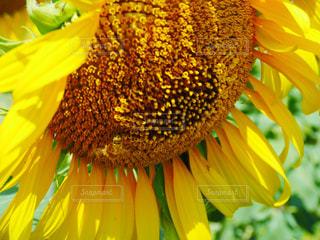 花の写真・画像素材[698298]