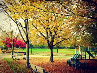 公園のベンチの写真・画像素材[894103]
