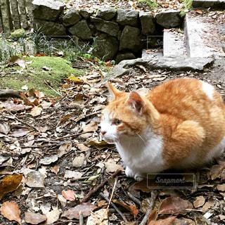 猫の写真・画像素材[1184889]