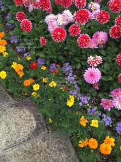 庭園の写真・画像素材[1184890]