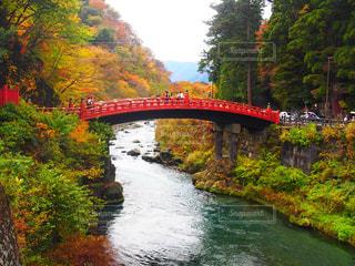 紅葉と赤い橋の写真・画像素材[1185615]