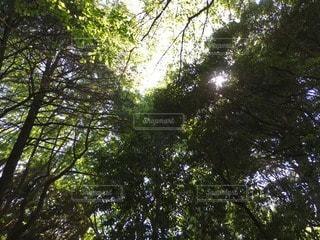 自然 - No.38708