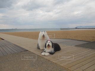海岸のお散歩🐾の写真・画像素材[1187559]