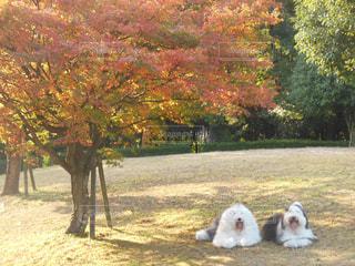 秋の紅葉🍁の写真・画像素材[1188028]