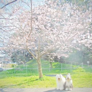 春爛漫の写真・画像素材[1189447]