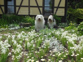 庭に犬の写真・画像素材[1190169]