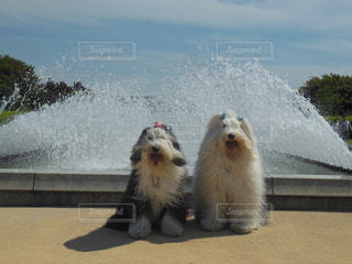 水しぶきが気持ちいいね😊の写真・画像素材[1190802]