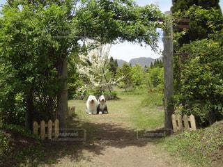 高原のお散歩の写真・画像素材[1190803]