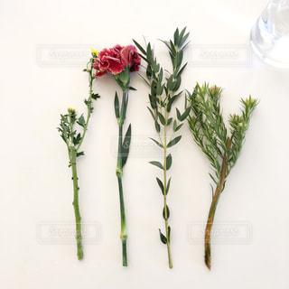 花を活ける時の写真・画像素材[1659527]