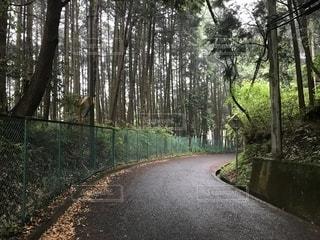 フォレスト内のツリーの写真・画像素材[1186276]