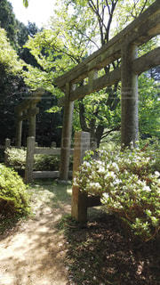 高野山の鳥居の写真・画像素材[1186439]