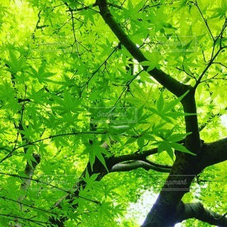 自然の写真・画像素材[70159]
