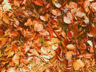 秋を感じるの写真・画像素材[1782475]