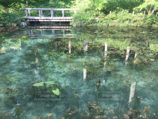 モネの池の写真・画像素材[1808052]