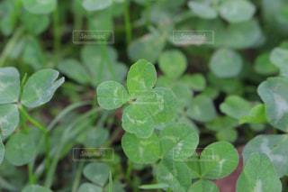 近くの植物のアップの写真・画像素材[1187481]