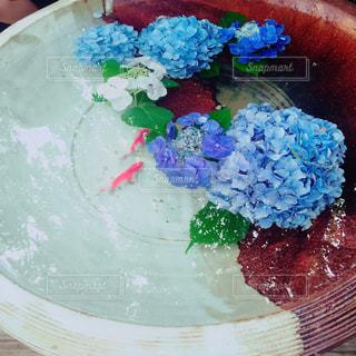 紫陽花と金魚の写真・画像素材[1187672]