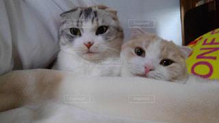 猫親子の写真・画像素材[1187674]