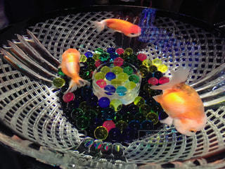 金魚の写真・画像素材[1192239]