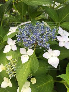 花の写真・画像素材[1188309]