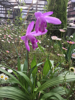植物の紫色の花の写真・画像素材[1191513]