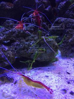 水面下を泳ぐ魚たちの写真・画像素材[1189756]