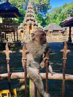 猿と寺の写真・画像素材[1188699]