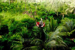 バリ島のブランコの写真・画像素材[1188793]