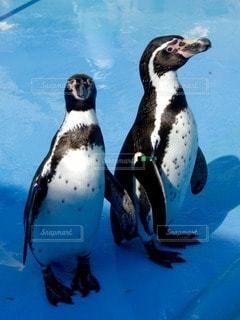 No.94784 ペンギン