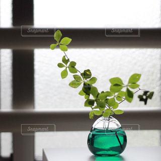 窓際の一輪挿しにドウダンツツジの写真・画像素材[1188522]