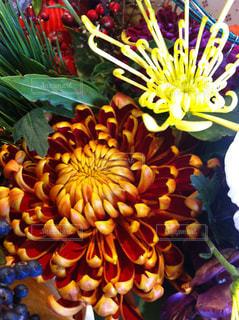 近くの花のアップの写真・画像素材[1189155]