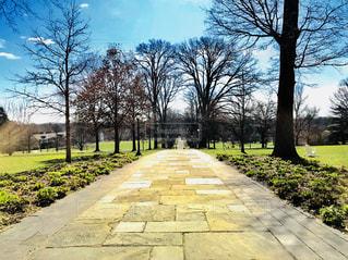 スワスモアカレッジの石畳の一本道の写真・画像素材[1200083]