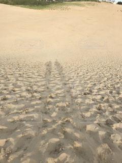 砂丘の写真・画像素材[1203213]