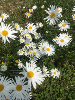 黄色の花の束の写真・画像素材[1189957]