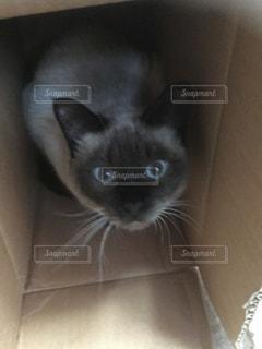 箱入り娘猫の写真・画像素材[1195389]