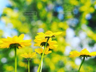 初夏の花の写真・画像素材[1190850]