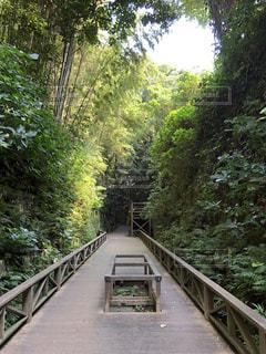 猿島の遊歩道風景の写真・画像素材[1372575]