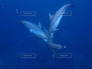 イルカの写真・画像素材[1230752]